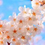 福岡の花見スポット