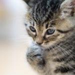 猫の楽園「相島」写真展